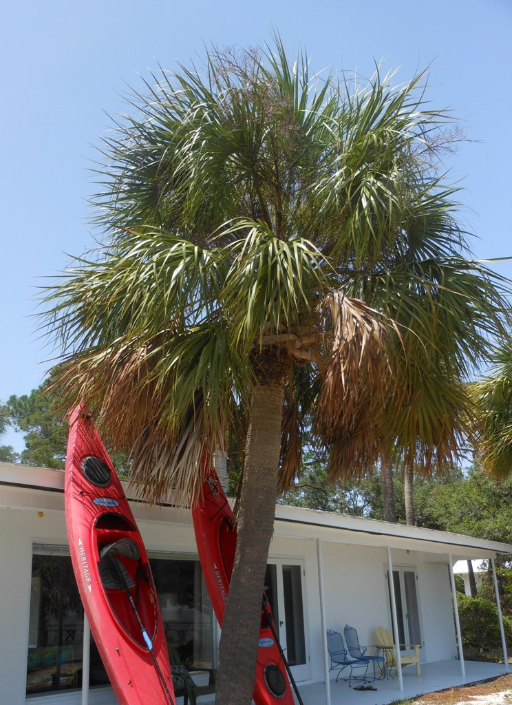 Kayaking the Keys has never been eaiser. Surrounded by open Gulf and bayside waters. Go Paddle!
